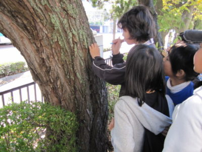 チャレンジ森林体験「木を観て森を感じよう」全国各地で開催